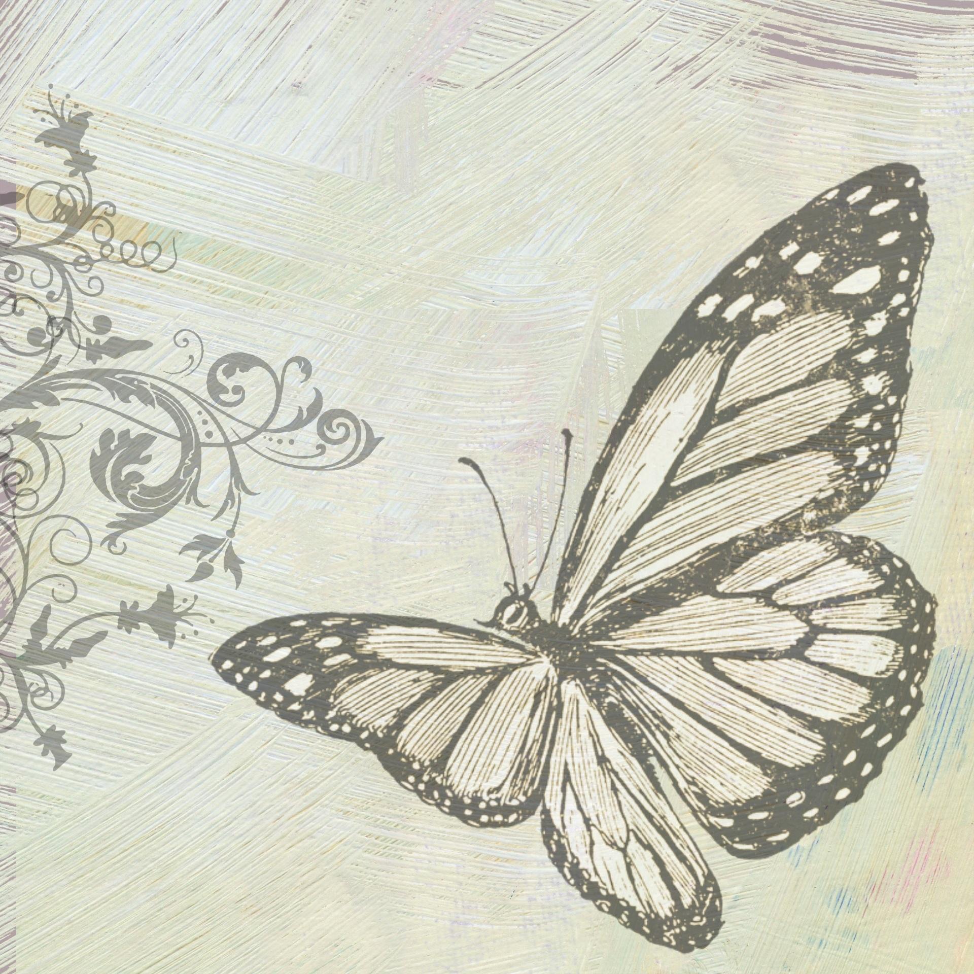 butterfly-998292