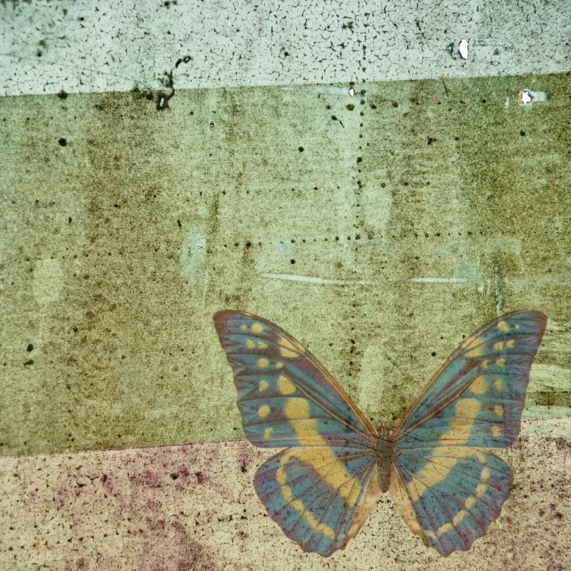 butterfly-998316